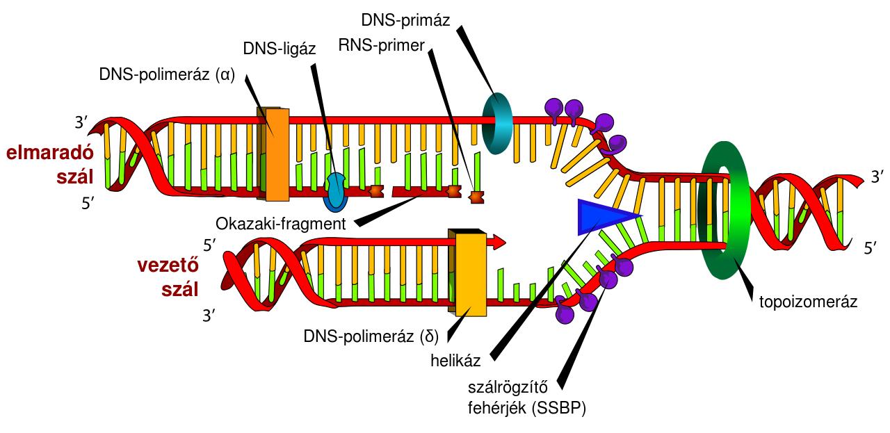 DNS megkettőződés